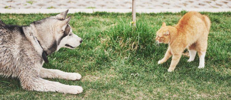 caini-sau-pisici