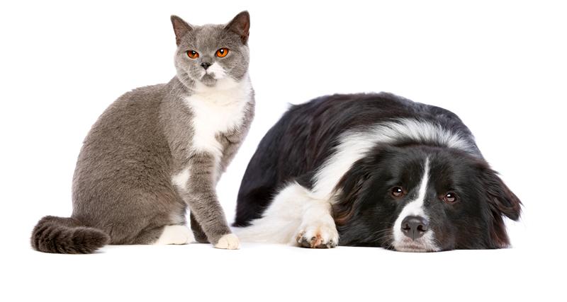 cel-mai-bun-animal---caini-sau-pisici